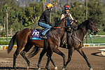 ARCADIA, CA  OCTOBER 25: Breeders' Cup Juvenile  entrant Storm the Court, trained by Peter A. Eurton, exercises in preparation for the Breeders' Cup World Championships at Santa Anita Park in Arcadia, California on October 25, 2019.   (Photo by Casey Phillips/Eclipse Sportswire/CSM)