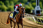 MAY13, 2021: Forever Boss gallops in preparation for the Black Eyed Susan Stakes at Pimlico Race Course in Baltimore, Maryland on May 13, 2021. EversEclipse Sportswire/CSM