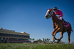 HALLANDALE FL - FEBRUARY 27: Catch a Glimpse #8, with Florent Geroux aboard wins the Herecomesthebirde Stakes at Gulfstream Park on February 27, 2016 in Hallandale, Florida.(Photo by Alex Evers/Eclipse Sportswire/Getty Images)