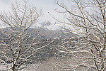 winter scene of Longs Peak through aspen trees, branches, Populus tremuloides, snowcapped peak, fresh snow, Moraine Park, Rocky Mountain National Park, early spring, Colorado, USA