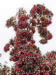 9.20.18 - Tree of Orbs...