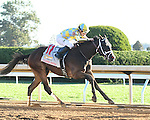 LEXINGTON, KY - OCTOBER 08:  #11 Classic Empire wins the Claiborne Breeders' Futurity at Keeneland on October 8, 2016 in Lexington, Kentucky. (Photo by Jessica Morgan/Eclipse Sportswire/Getty Images)