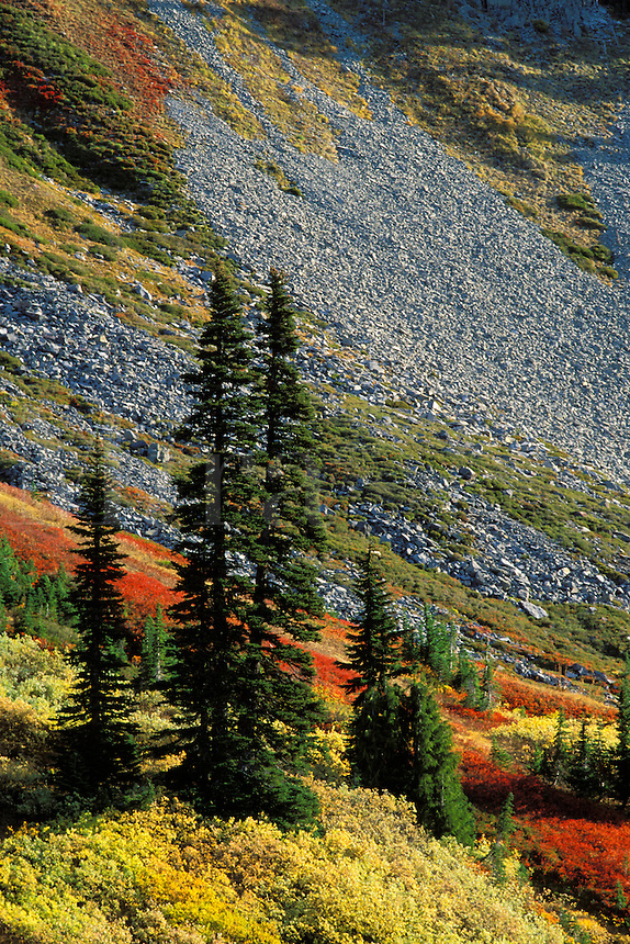 Fall colored meadows, Paradise Valley, Mount Rainier National Park, Pierce County, W