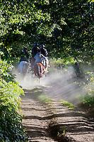 """Europe/France/Normandie/Basse-Normandie/50/Saint-Clément-Rancoudray: Randonnée équestre avec l'association Cheval Nature du Sud Manche  dans le Parc naturel régional Normandie-Maine sur la voie verte  Fulgence Bienvenüe, La voie verte emprunte le parcours d'une ancienne voie de chemin de fer construite par Fulgence Bienvenüe. <br /> Àuto N°:  2012-431 , Àuto N°:  2012-432, Àuto N°:  2012-43"""", Àuto N°:  2012-434; Àuto N°:  2012-435 // urope/France/Normandie/Basse-Normandie/50/Saint-Clément-Rancoudray:  Horseback Riding, Normandie-Maine Regional Natural Park"""