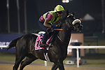 DUBAI,UNITED ARAB EMIRATES-MARCH 23: Qatar Man,trained by Marco Botti,exercises in preparation for the UAE Derby at Meydan Racecourse on March 23,2017 in Dubai,United Arab Emirates (Photo by Kaz Ishida/Eclipse Sportswire/Getty Images)