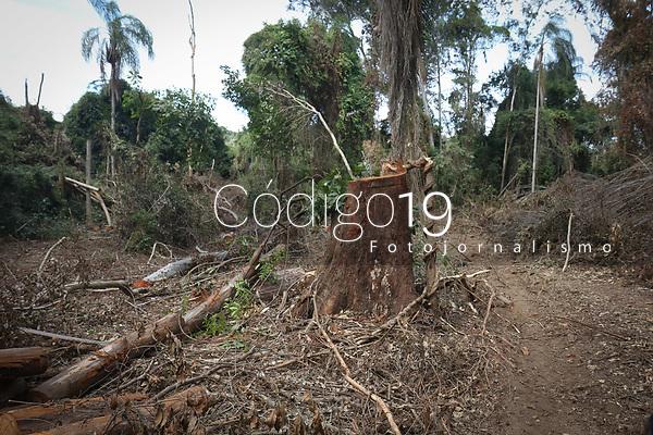 Campinas (SP), 28/05/2021 - Derrubada de árvores as margens do Rio Atibaia proximo ao distrito de Sousas em Campinas, interior de São Paulo, nesta sexta-feira (28).