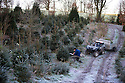 2014_12_03_frosty_christmas_trees