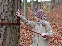 Mädchen fühlt Rinde, Waldspiel mit verbundenen Augen zum Kennenlernen von Rinde, Borke, Wald-Kiefer, Waldkiefer, Gemeine Kiefer, Kiefern, Föhre, Pinus sylvestris, Scots Pine, Le Pin sylvestre