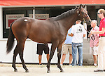 11 September 2010.  Hip #11  Tiznow - American River colt, consigned by Eaton Sales.
