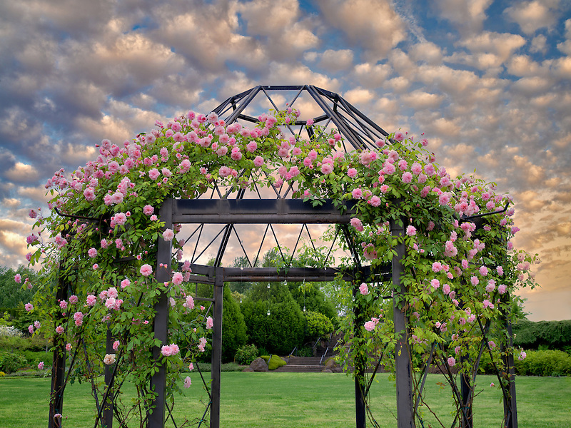 Rose arbor. Oregon Garden. Oregon