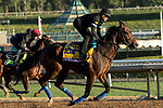 ARCADIA, CA  OCTOBER 26: Breeders' Cup Classic entrant McKinzie, trained by Bob Baffert, exercises in preparation for the Breeders' Cup World Championships at Santa Anita Park in Arcadia, California on October 26, 2019. (Photo by Casey Phillips/Eclipse Sportswire/CSM)