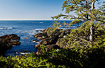 View of Carolina Channel and the Pacific Ocean seen near dawn through rain forest from the Wild Pacific Trail along cliffs over Anthrotrite Point, Vancouver Island, near the fishing town of Ucluelet, British Columbia and Pacific Rim National Park, Canada.