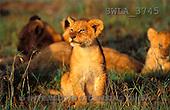 Carl, ANIMALS, wildlife, photos(SWLA3745,#A#)