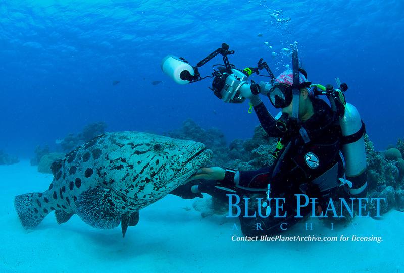 (Multiple values) Great Barrier Reef; Australia. Cod Hole, Potato Cod (Epinephelus tukula)