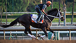 October 26, 2014:  Pants On Fire, trained by Kelly Breen, exercises in preparation for the Breeders' Cup Dirt Mile at Santa Anita Race Course in Arcadia, California on October 26, 2014. Scott Serio/ESW/CSM