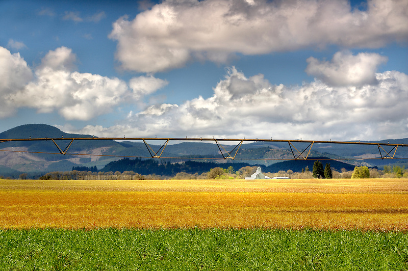Grass field, partly sprayed with round up and barn with irrigation equipment. Near Monroe, OR