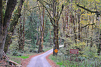 Start of primitive Whiskey Bend Road, Elwha River Valley, Olympic National Park, Washington State
