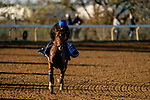 November 4, 2020: Sealiway, trained by trainer Frederic Rossi, exercises in preparation for the Breeders' Cup Juvenile Turf at Keeneland Racetrack in Lexington, Kentucky on November 4, 2020. Scott Serio/Eclipse Sportswire/Breeders Cup