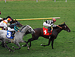 October 3, 2010.Champ Pegasus riden by Joel Rosario wins The Clement L. Hirsch Turf Championship at Hollywood Park, Inglewood, CA_Cynthia Lum/Eclipse Sportswire.com