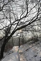 Minus 13 Grad in Leipzig und Umgebung - im Bild: Die Sonne steigt empor - die Luft ist diesig durch die klirrende Kälte - Blick von der Aussichtsplattform im Rosental in Richtung City. Foto: Norman Rembarz..Norman Rembarz , ASV Autorennummer 41043728 , Holbeinstr. 14, 04229 Leipzig, Tel.: 01794887569, Hypovereinsbank: BLZ: 86020086, KN: 357889472, St.Nr.: 231/261/06432 - Jegliche kommerzielle Nutzung ist honorar- und mehrwertsteuerpflichtig! Persönlichkeitsrechte sind zu wahren. Es wird keine Haftung übernommen bei Verletzung von Rechten Dritter. Autoren-Nennung gem. §13 UrhGes. wird verlangt. Weitergabe an Dritte nur nach  vorheriger Absprache..