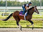 January 24, 2020: True Timber gallops as horses prepare for the Pegasus World Cup Invitational at Gulfstream Park Race Track in Hallandale Beach, Florida. Scott Serio/Eclipse Sportswire/CSM