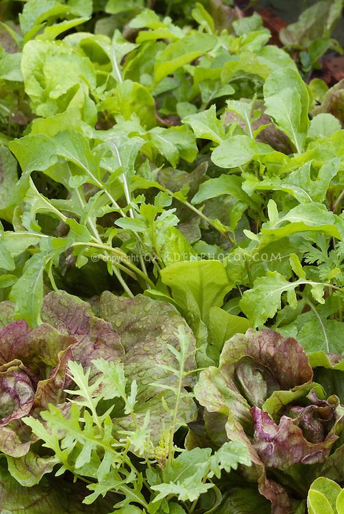 Gourmet Salad Green vegetables