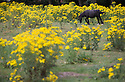 25/06/16<br />