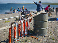 Subsistence fishing with set nets in Teller, Alaska. Photo by James R. Evans