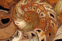 A close view by macro of the central part of a fossil shell, probably an ammonite, with its characteristic spiral pattern (Rome, 2015).<br /> <br /> Un'immagine dettagliata della parte centrale di una conchiglia fossile, probabilmente un'ammonite, con il suo caratteristico disegno a spirale (Roma, 2015).