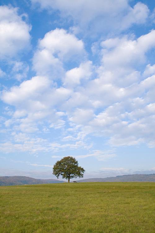Europa, DEU, Deutschland, Hessen, Gladenbacher Bergland, Gladenbach, Naturpark Lahn-Dill-Bergland, Einzelner Baum auf einem Berg, Eiche, Eichenbaum, Himmel, Wolken, Kategorien und Themen, Natur, Umwelt, Landschaft, Jahreszeiten, Stimmungen, Landschaftsfotografie, Landschaften, Landschaftsphoto, Landschaftsphotographie, Naturschutz, Naturschutzgebiete, Landschaftsschutz, Biotop, Biotope, Landschaftsschutzgebiete, Landschaftsschutzgebiet, Oekologie, Oekologisch, Typisch, Landschaftstypisch, Landschaftspflege....[Fuer die Nutzung gelten die jeweils gueltigen Allgemeinen Liefer-und Geschaeftsbedingungen. Nutzung nur gegen Verwendungsmeldung und Nachweis. Download der AGB unter http://www.image-box.com oder werden auf Anfrage zugesendet. Freigabe ist vorher erforderlich. Jede Nutzung des Fotos ist honorarpflichtig gemaess derzeit gueltiger MFM Liste - Kontakt, Uwe Schmid-Fotografie, Duisburg, Tel. (+49).2065.677997, ..archiv@image-box.com, www.image-box.com]