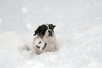 cuccioli, cani san bernardo, foto cani umoristiche, foto cuccioli simpatiche carine,<br /> puppies, dogs Saint Bernard, photo humorous dogs, puppies pictures cute funny,<br /> Welpen, Hunde Bernhardiner, Foto humorvoll Hunde, Bilder Welpen niedlich lustig,<br /> valpar, hundar Saint Bernard, foto humoristiska hundar, valpar bilder gullig rolig,<br /> 小狗,狗聖伯納,照片幽默的狗,小狗圖片可愛搞笑,<br /> 子犬が面白いかわいい絵、セントバーナード、写真ユーモラスな犬は犬、子犬,<br /> szczenięta, psy bernardyn, humorystyczne zdjęcia psów, zdjęcia szczeniąt słodkie śmieszne,<br /> щенки, собаки сенбернара, фото юмористические Собаки, щенки фотки мило смешно,<br /> cachorros, perros San Bernardo, fotos humorísticas perros, cachorros imágenes linda divertida