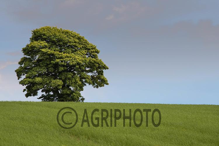 19-5-2021 Landscape in Rutland<br /> ©Tim Scrivener Photographer 07850 303986<br />      ....Covering Agriculture In The UK....