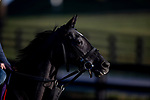 November 3, 2020: Outadore, trained by trainer Wesley A. Ward, exercises in preparation for the Breeders' Cup Juvenile Turf at Keeneland Racetrack in Lexington, Kentucky on November 3, 2020. Alex Evers/Eclipse Sportswire/Breeders Cup