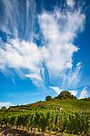 Deutschland, Baden-Wuerttemberg, Schwarzwald, Gengenbach im Ortenaukreis: Weinberg oberhalb <br /> des Kinzigtals | Germany, Baden-Wurttemberg, Black Forest, Gengenbach at Kinzig Valley: vineyard and funny cloud formation
