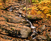 Waterfall in a Maple/Beech forest in the White Rocks Recreation Area; Green Mountain National Forest, VT