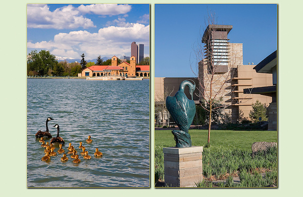 Canada geese in City Park (left) and the  Wildlife Center in south Denver. .  John leads private, wildlife photo tours throughout Colorado. Year-round. .  John offers private photo tours in Denver, Boulder and throughout Colorado. Year-round Colorado photo tours. Denver Colorado tours.