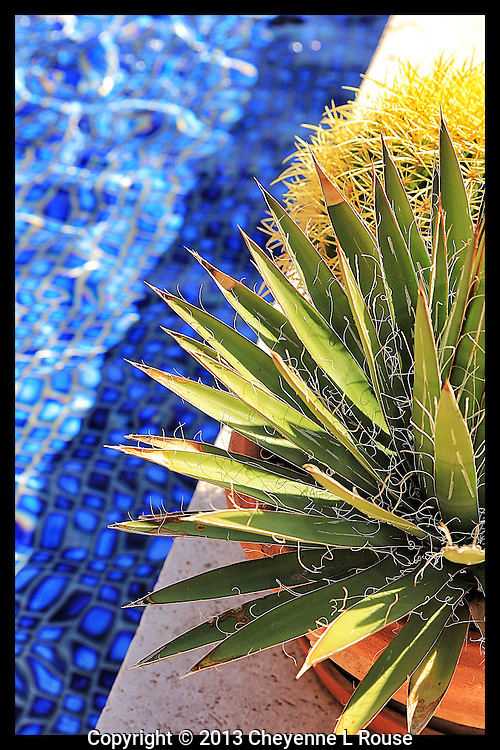 Desert contrast - Arizona<br /> Yucca and cactus next to water<br /> © 2013 Cheyenne L Rouse/All rights reserved.