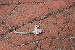 fish skeleton on orange rock