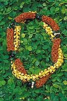 firecracker lei with kukui nut and ti leaf, a beautiful Hawaiian tradition