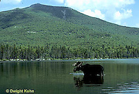 MS04-014x   Moose - bull (male) feeding at Sandy Stream Pond in Baxter State Park, Maine - Mt. Katahdin in view - Alces alces