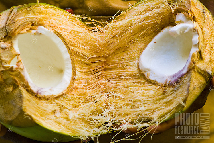 Close-up of the insides of a freshly opened island coconut.