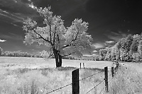 A tree and fence line photographed in infrared in Orange County, Va. Photo/Andrew Shurtleff