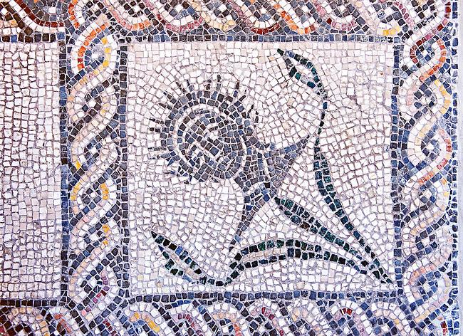 Roman  floor mosaic . National Roman Museum, Rome, Italy