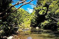 Pararaha Stream west of Auckland - New Zealand