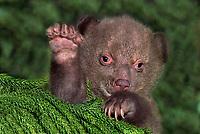 Wildlife: baby animals