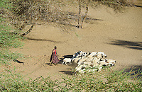 KENIA Turkana, Lodwar, Turkana shepherd with goats at search for water and pasture / Turkana Hirte mit Ziegen auf der Suche nach Wasser und Futter