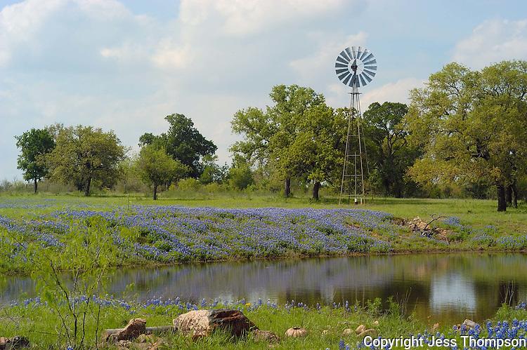 Bluebonnets and Windmill near Kingsland, TX