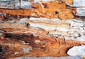ecorce de niaouli
