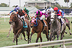Hallandale Beach, FL- February 06: #10 Power Alert with jockey Julien Leparoux in front at the wire in the 5 furlong Turf Sprint Stakes. . (Photo by Arron Haggart)