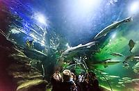 Visitors in the tunnel under the aquarium in the Deep Sea World, Edinburgh, Edinburgh, Scotland on 2015/06/08. Foto EXPA/ JFK/Insidefoto